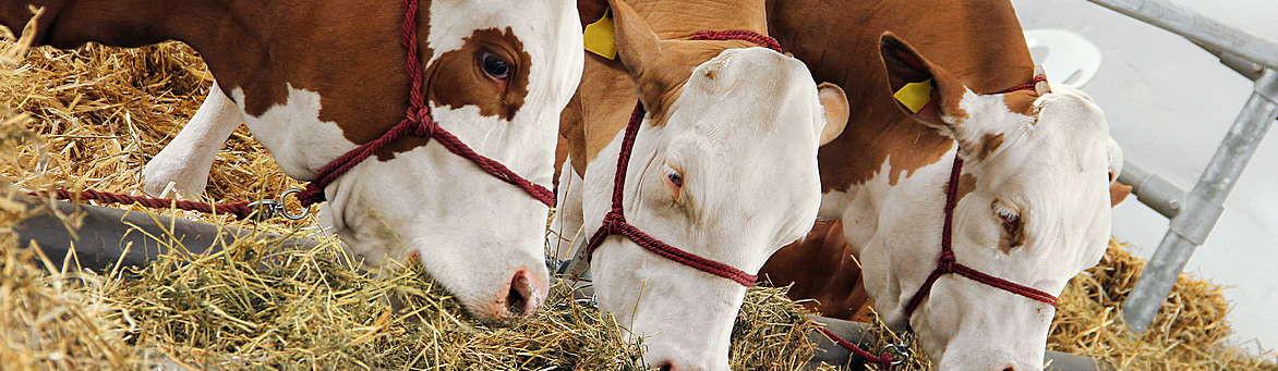 Program zemědělství